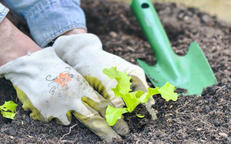 Lucrari agricole in gradina in luna mai